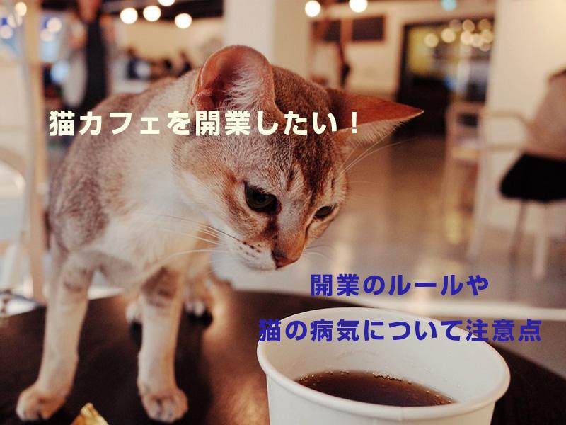 猫カフェを開業したい!開業のルールや猫の病気について注意点を解説